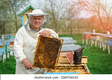 Beekeeper holding a honeycomb full of bees. Beekeeper in protective workwear inspecting honeycomb frame at apiary. Works on the apiaries in the spring