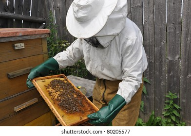The beekeeper holds in hands a framework with bees
