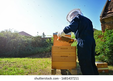 Beekeeper inspecting the beehive in the garden. Summer day. Beekeeping concept.
