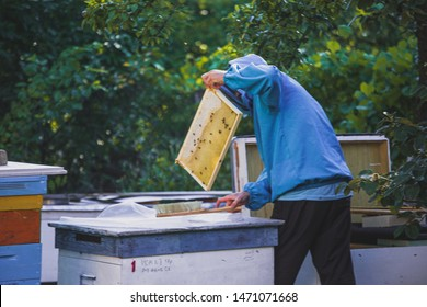 Apiary Images, Stock Photos & Vectors   Shutterstock