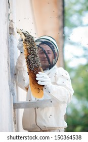 A beekeeper inspects hives. Frame with bees. wild bees. beemaster