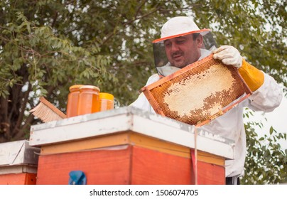 Beekeeper lifting shelf out of the hive. Beekeeper at work, cleaning the hive and collecting honey. Checking the Beehive's Progress. Beekeeper in protective gloves inspecting frame with honeycomb.