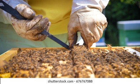 The beekeeper looks after bees, honeycombs, a lot of honey, in a protective beekeeper's beast. Concept: bee hive, pure natural product, useful product, yellow golden honey, swarm of bees, hardworking.