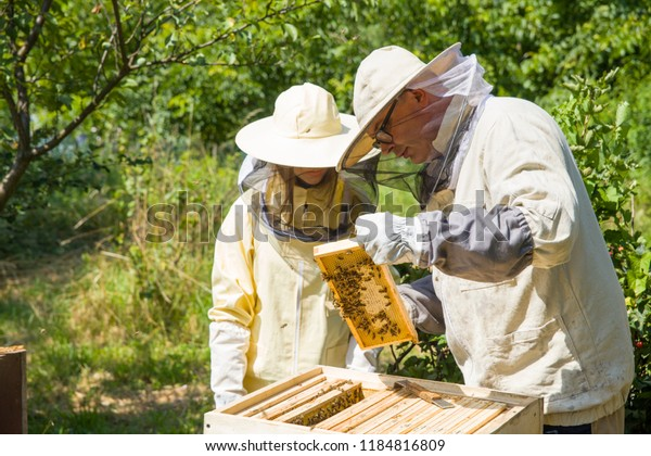 The beekeeper looks at the bee to the hive. Care of bees in the apiary. Extracting honey from the behive.