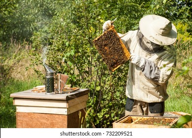 The beekeeper looks at the beehive. Honey collection and bee control. Bee breeding and bee keeping.