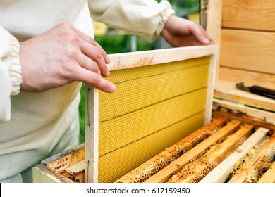 The beekeeper places the hive a new framework for honey. Honeycomb.