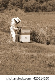 beekeeper with protective suit during harvesting honey and many hives with bees in the field
