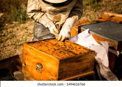 Beekeeper in protective workwear inspecting honeycomb frame at apiary. Beekeeping concept. Beekeeper harvesting honey