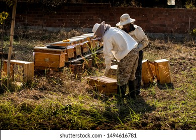 Beekeeper in protective workwear inspecting honeycomb frame at apiary. Beekeeping concept. Beekeeper harvesting honey