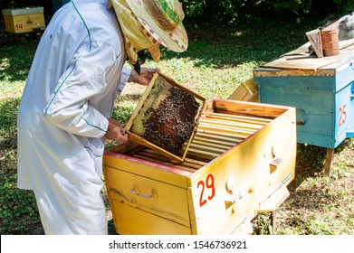 A beekeeper takes out a frame with bees from a hive on a sunny summer day.
