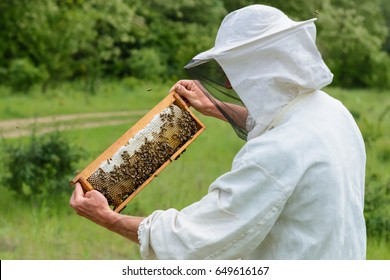 The beekeeper takes out from the hive honeycomb filled with fresh honey. Apiculture.