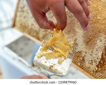 Beekeeper uncapping honeycomb with special beekeeping fork. Beekeeping concept.