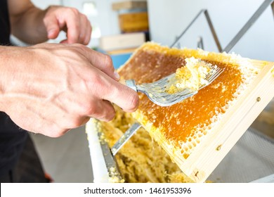 Beekeeper is uncapping honeycomb with special beekeeping tool . Apiculture and sericulture concept