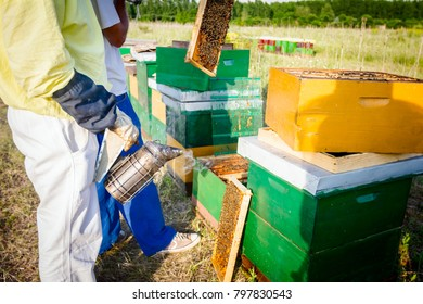 Beekeeper is using smoking pot to relax bees until he is taking out the honeycomb on wooden frame to control situation in bee colony.