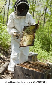 Beekeeper wearing protective clothing inspects the honeycomb