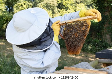 Beekeeper wearing beekeeper suit holding up a frame with honey comb covered in bees.
