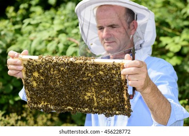 beekeeper at work with honeycomb frame