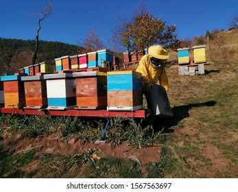 A beekeeper work on his hives. Colorful hives. Beekeeping in Serbia.