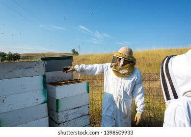 Beekeeper working in a bee yard next to bee hives near Buffalo, Wyoming
