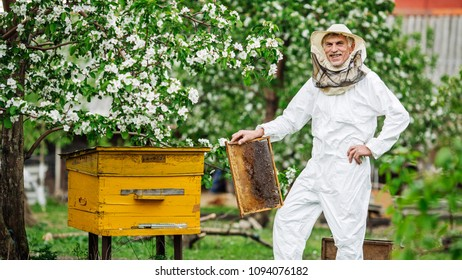 Beekeeper is working with bees and beehives on the apiary. Apiculture concept.