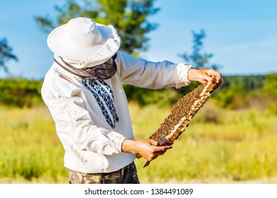 Beekeeper is working with bees and beehives on the apiary. Frames of a bee hive. Apiary concept