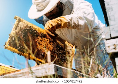 Beekeeper working collect honey. Beekeeping concept.