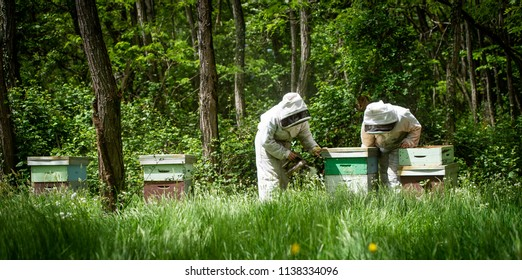 Beekeeper working collect honey. Beekeeping concept, France