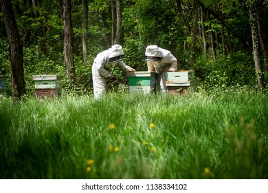 Beekeeper working collect honey. Beekeeping concept, France