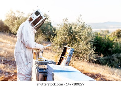 Beekeeper working collect honey. Beekeeping concept