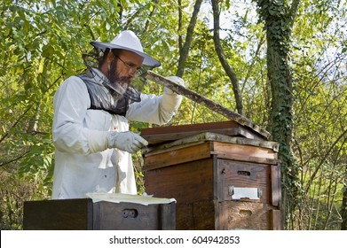 Beekeeper working in exterior with beehives, in his organic apiary, in forest permaculture garden, ecological beekeeping, smoker, holding frames, working with bees