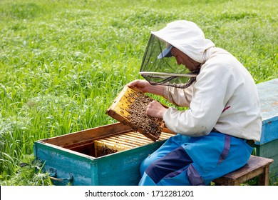 a beekeeper works in an apiary on a Sunny morning. care for agriculture. a man works in an apiary. The concept of the beekeeper