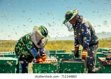 Beekeepers collect honey
