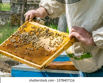Beekeeper's hands holding a wooden frame with honeycombs. Inspection of the beehive at the apiary in the spring garden.