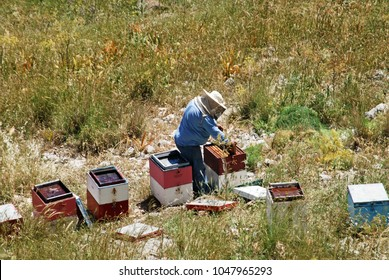 Beekeepers near the town of Kalymnos, Kalymnos island, Greece. Pothia, the capital town, along with the whole island, is trying to utilize apiculture for cultural, environmental and economical reasons
