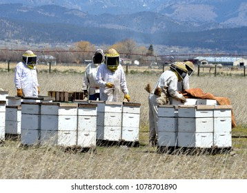 Beekeepers in protective suits and mesh hats with hives in the bee yard.