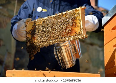 Beekeepers use a smoker. Special tool which is used for calm bees down.