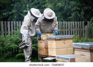 Bee Standing On Flower Images, Stock Photos & Vectors