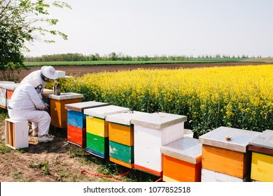 Beekeepers working on apiary in nice sunny day