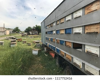 beekeeping apiary, beehive with bees