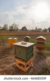 Beekeeping apiary hives in the garden