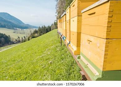 Beekeeping farm with bee hives