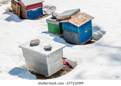 Beekeeping in winter.  The Bee yard or apiary is covered in snow.  The colorful hives are closed down for winter.