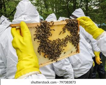 Beekeper inspective a new frame of bees. Closeup