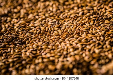 Beer Barley Malted Caramel Grains Macro Texture