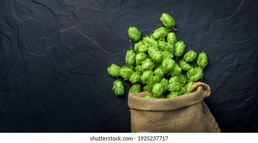 Beer brewing ingredients, hop cones, scattered out of a fallen sack. Beer brewery concept. Oktoberfest background.