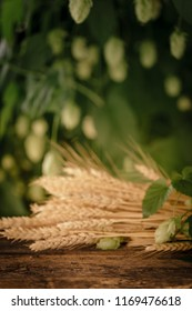 Beer brewing ingredients. Hop and wheat ears on wooden rustic old table. Beer brewery concept. Hop cones and wheat closeup. Sack of hops and sheaf of wheat on vintage background. Unfocused background.