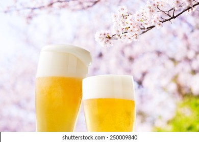 Beer (cherry blossoms japan)
