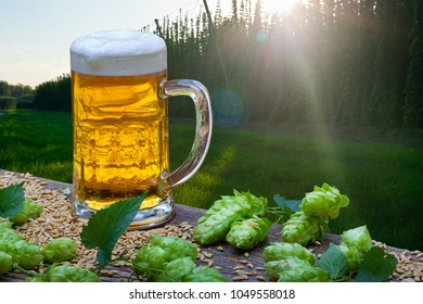 Beer Glas with Hop Cones in the Hop Field