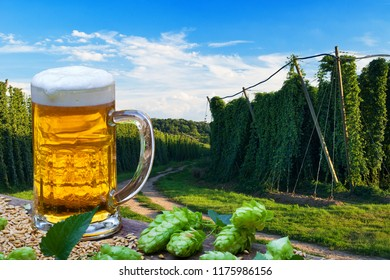 Beer glass with barley in front of hop field