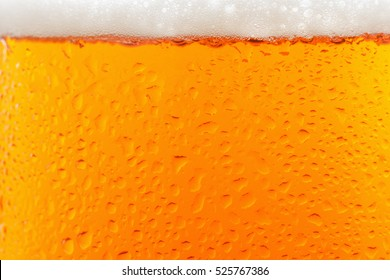 Beer glass isolated background with foam and drop. Yellow alcohol refreshment beverage.